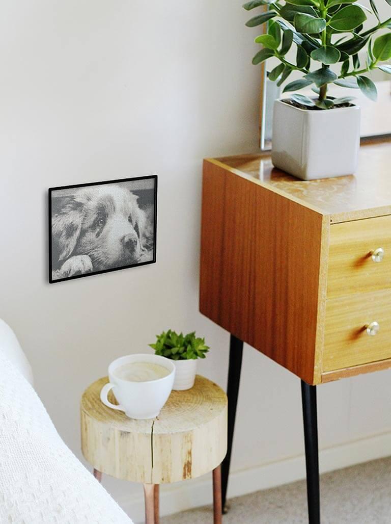 Point-de-croix-Marie-Coeur-chien-berger-australien